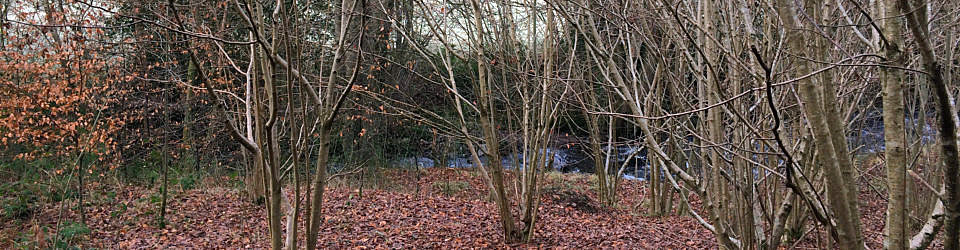 Copse around a Brook